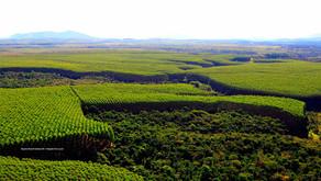 Majeski pede programa para regularização ambiental