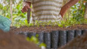 Majeski quer vantagens para proprietário rural que preserva o meio ambiente