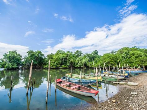 Indicações de Majeski destacam qualidade do ar e proteção de manguezais