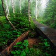 Tatrasnký prales