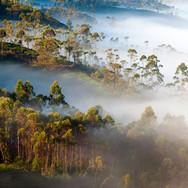 Ráno v džungli