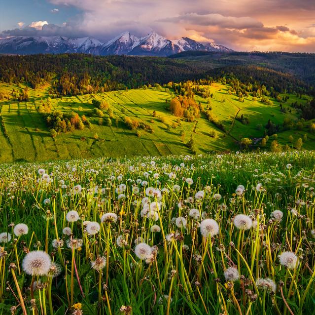 Osturňa, jar, Belianske tatry, zamagurie