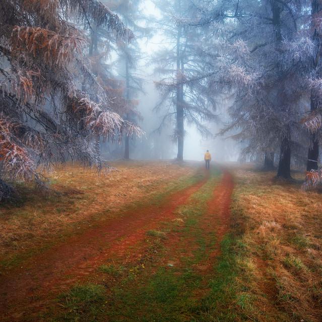 Mrazivý dych lesa
