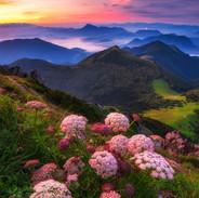 Kvetinová nádhera v Malej Fatre