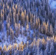 Svetlo a les
