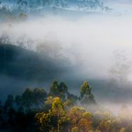 V ranných hmlách