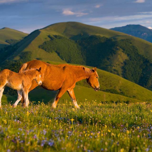 Krajina koní