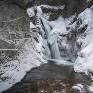 Zimná divočina