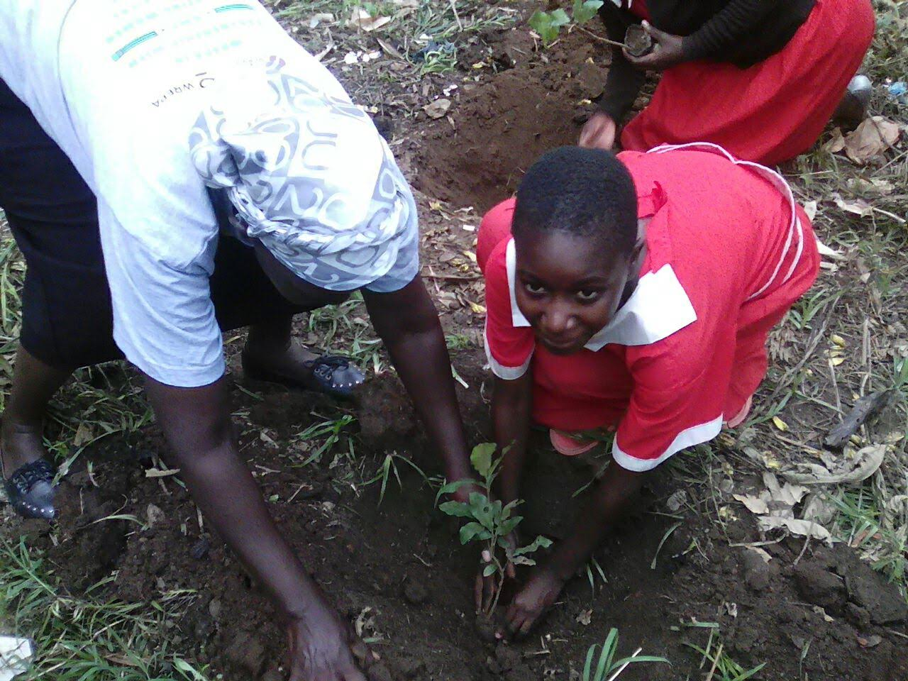 Budalang'i tree planting