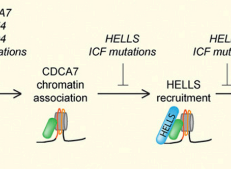 HELLS and CDCA7 comprise a bipartite nucleosome remodeling complex defective in ICF syndrome