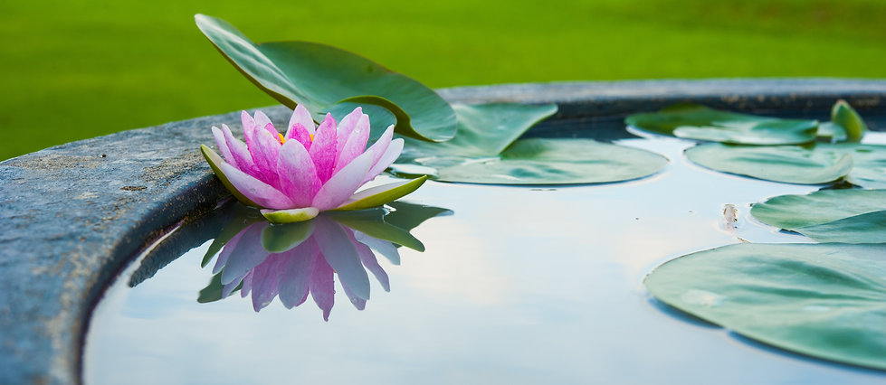 dreamstime_l_46188228pink lotus in pond