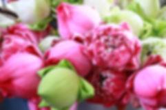 flower-3096035.jpg