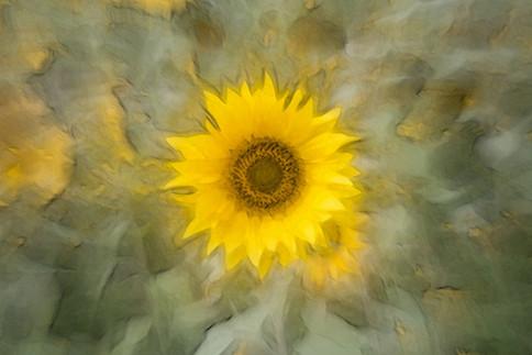 Sonnenblume (1).jpg