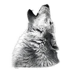 Howling Timber Wolf