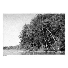 Winnipesaukee Shoreline