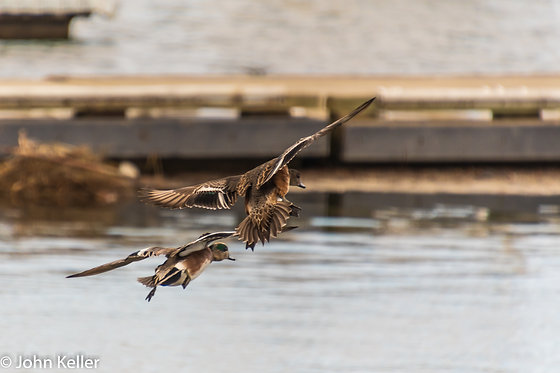 Ducks Landing | 16x24