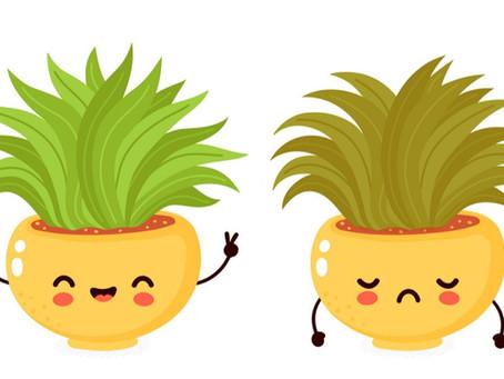 What makes a plant happy or sad? Understanding Evapotranspiration!