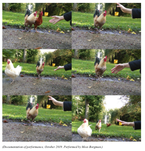 WA documentation dance for chicken.png