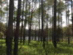 Kirirom 01 filter.jpg