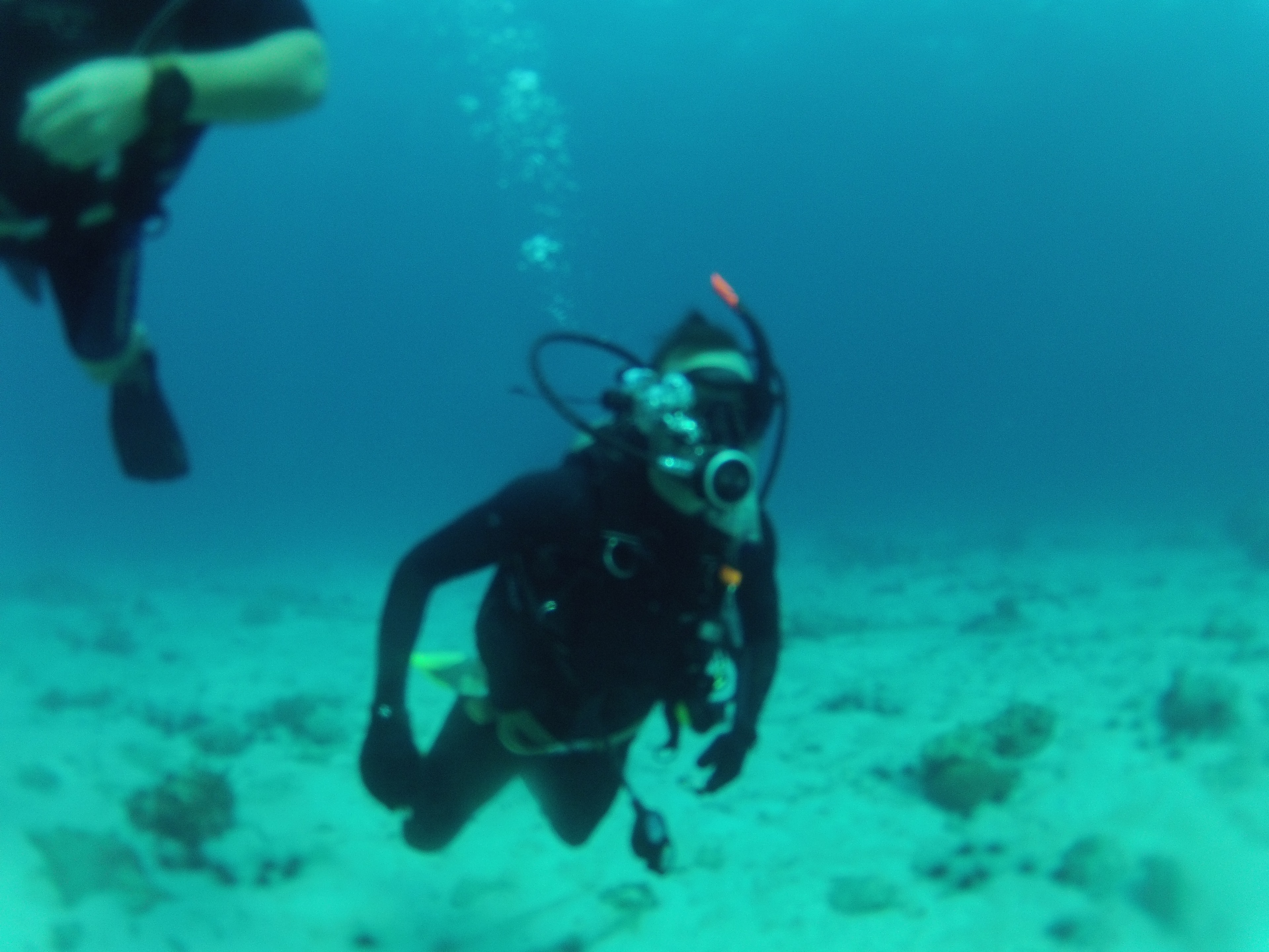 C4 diving.jpg