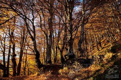 Trees of Biograd