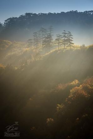 Misty sunrise in Tara