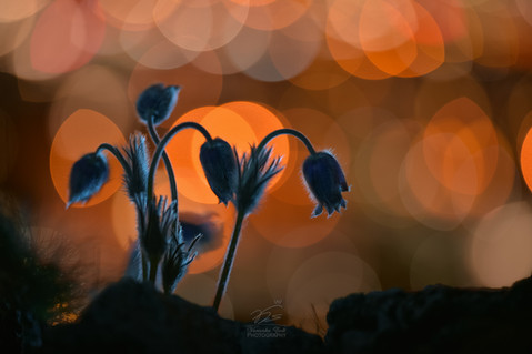 Anemone and the citylights