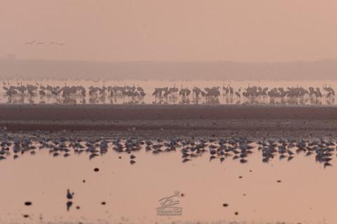 Migration time (cranes)