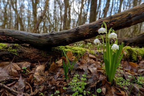 Hidden in the forest.jpg