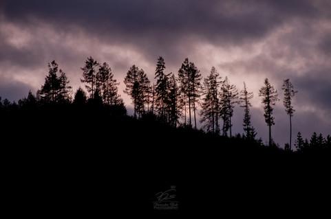 Shaggy trees
