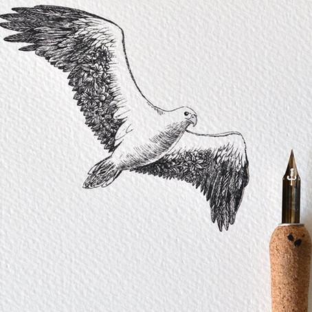 Sea-eagle art #highergroundraptors, #sea-eagle, #rehabilitation, #wildlife, #rescue, #raptors