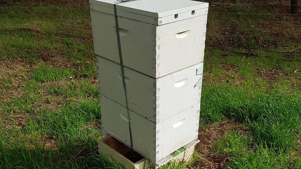 Triple Beehive
