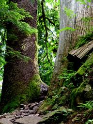 Trail Giants
