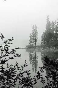Foggy Tranquility