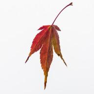 Fall Suspension