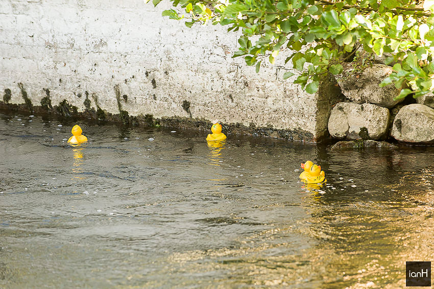 Duck race at Sopley Mill wedding