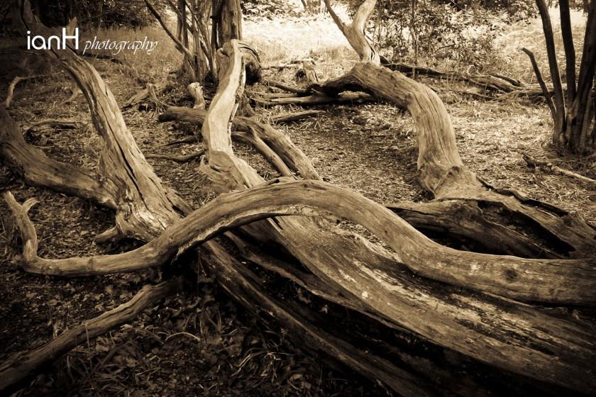 Fallen-trees-across-the-forest
