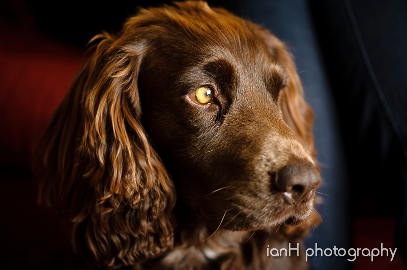Pet_portrait_photography_Dorset