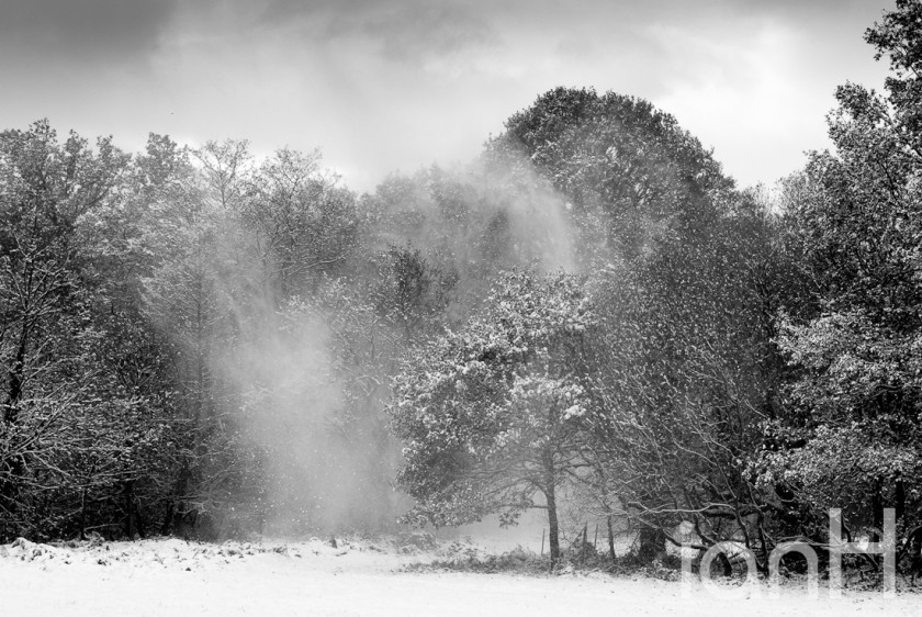 Photograph of snow blown from trees - Dorset photographer