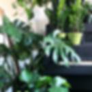 Forage, Plants, Arrangements, Services,Tennyson, Berkeley,Denver, Colorado