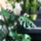 Forage, Plants, Shops & Boutiques, Best Shopping, Tennyson Berkeley