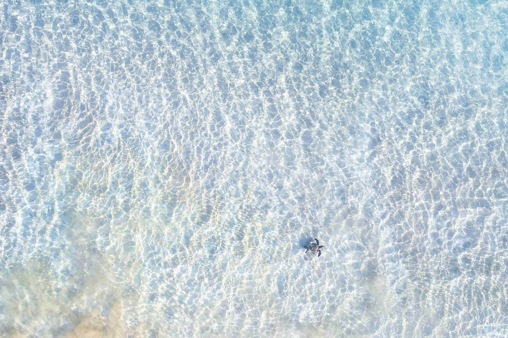 Drone shot of turtle in clear sea waters
