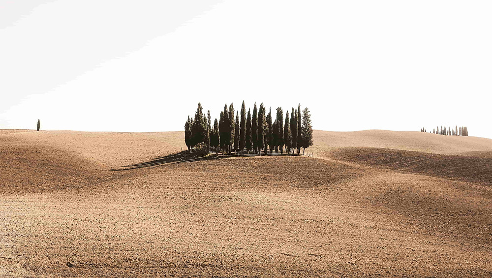 Wedding photoshoot destination: Rolling hills in tuscany with small cluster of trees