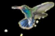 Hummingbird-PNG-02_edited.png