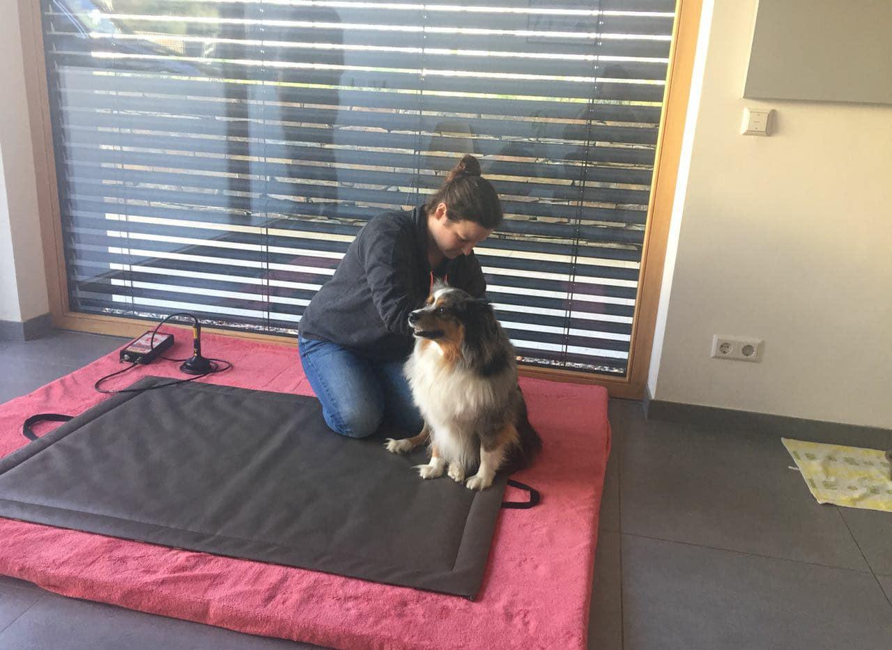 Wellnessmassage für den Hund