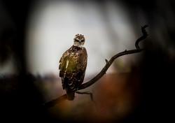 DavidCrookes-WildLifePhotographer-Kruger