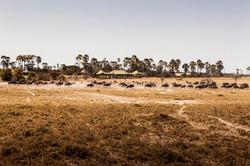 DavidCrookes-JacksCamp-Botswana-12-0623.