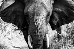 AbuCamp-Botswana-CrookesAndJackson-5961