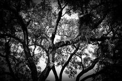 David Crookes   Wildlife