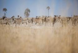 DavidCrookes-JacksCamp-Botswana-12-0577.